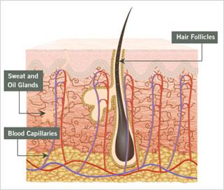 Устройство на косата