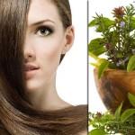 Билки и отвари срещу косопад и оплешивяване