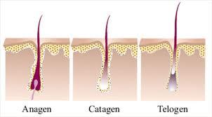 цикли космен растеж